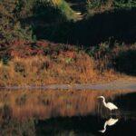Wetlands - The Great Ocean Road